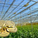 Майнинговые компании инвестируют в строительство сельскохозяйственных теплиц
